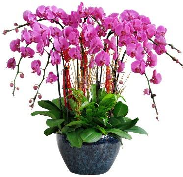 9 dallı mor orkide  Bilecik çiçekçi 14 şubat sevgililer günü çiçek