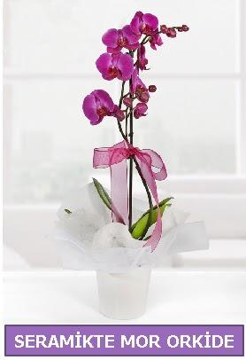 Seramik içerisinde birinci kalite tek dallı mor orkide  Bilecik çiçekçi İnternetten çiçek siparişi