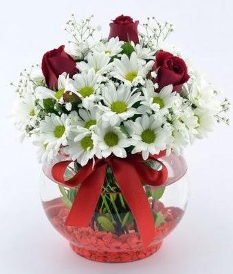 Fanusta 3 Gül ve Papatya  Bilecik çiçekçi internetten çiçek satışı