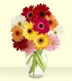 Bilecik çiçekçi çiçek yolla , çiçek gönder , çiçekçi   cam yada mika vazoda 15 özel gerbera