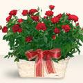 Bilecik çiçekçi İnternetten çiçek siparişi  11 adet kirmizi gül sepette