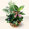 Bilecik çiçekçi çiçek satışı  5 adet canli çiçek sepette