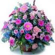 karisik mevsim kir çiçekleri  Bilecik çiçekçi çiçek gönderme sitemiz güvenlidir