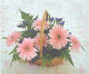 gerbera çiçeklerinde sepet   Bilecik çiçekçi çiçek yolla