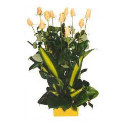 12 adet beyaz gül aranjmani  Bilecik çiçekçi kaliteli taze ve ucuz çiçekler