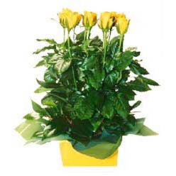 11 adet sari gül aranjmani  Bilecik çiçekçi online çiçekçi , çiçek siparişi