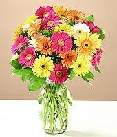 Bilecik çiçekçi çiçek online çiçek siparişi  17 adet karisik gerbera