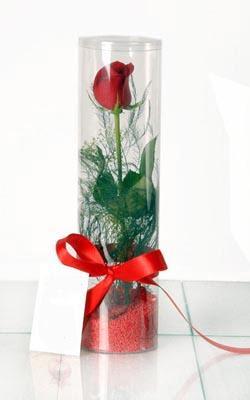 Bilecik çiçekçi çiçek yolla  Silindir vazoda tek kirmizi gül