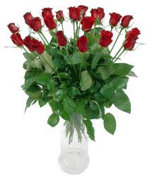 Bilecik çiçekçi çiçekçi telefonları  11 adet kimizi gülün ihtisami cam yada mika vazo modeli