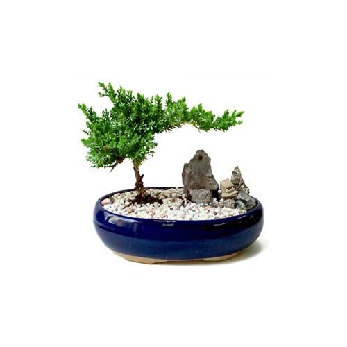 ithal bonsai saksi çiçegi  Bilecik çiçekçi çiçek gönderme