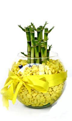 cam fanus içerisinde bambo  Bilecik çiçekçi internetten çiçek satışı