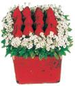 Bilecik çiçekçi çiçek gönderme  Kare cam yada mika içinde kirmizi güller - anneler günü seçimi özel çiçek
