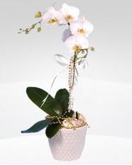 1 dallı orkide saksı çiçeği  Bilecik çiçekçi online çiçekçi , çiçek siparişi