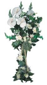 Bilecik çiçekçi çiçek mağazası , çiçekçi adresleri  antoryumlarin büyüsü özel