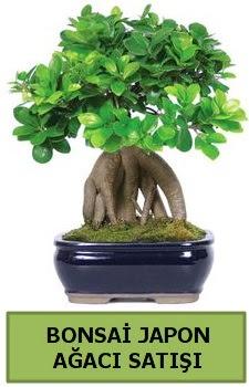 Bonsai japon ağacı satışı  Bilecik çiçekçi çiçek satışı