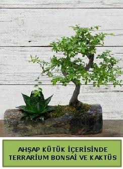 Ahşap kütük bonsai kaktüs teraryum  Bilecik çiçekçi internetten çiçek siparişi