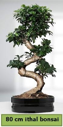 80 cm özel saksıda bonsai bitkisi  Bilecik çiçekçi çiçekçi telefonları