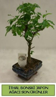 İthal bonsai japon ağacı bitkisi  Bilecik çiçekçi hediye sevgilime hediye çiçek