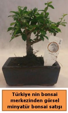Japon ağacı bonsai satışı ithal görsel  Bilecik çiçekçi çiçek yolla