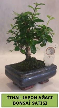 İthal japon ağacı bonsai bitkisi satışı  Bilecik çiçekçi çiçekçi telefonları