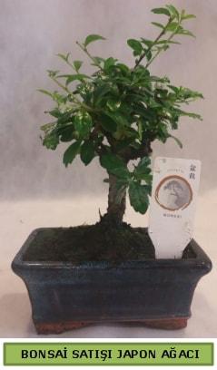Minyatür bonsai ağacı satışı  Bilecik çiçekçi çiçek gönderme