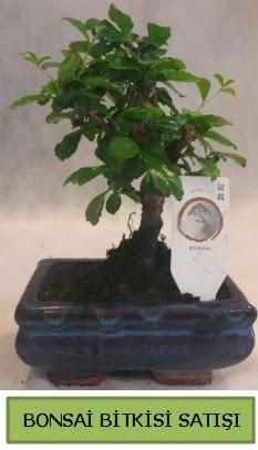 Bonsai ithal görsel minyatür japon ağacı  Bilecik çiçekçi ucuz çiçek gönder