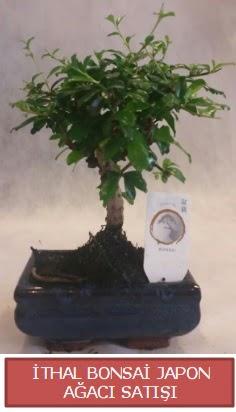 İthal küçük boy minyatür bonsai ağaç bitkisi  Bilecik çiçekçi çiçekçi telefonları