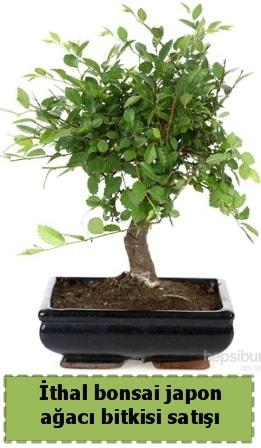 İthal bonsai saksı çiçeği Japon ağacı satışı  Bilecik çiçekçi İnternetten çiçek siparişi