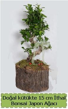 Doğal kütükte İthal bonsai japon ağacı  Bilecik çiçekçi çiçek gönderme