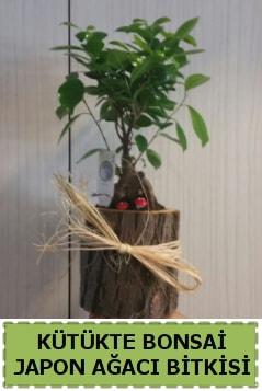 Kütük içerisinde doğal bonsai ağacı  Bilecik çiçekçi çiçekçi telefonları