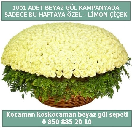 1001 adet beyaz gül sepeti özel kampanyada  Bilecik çiçekçi çiçek gönderme sitemiz güvenlidir