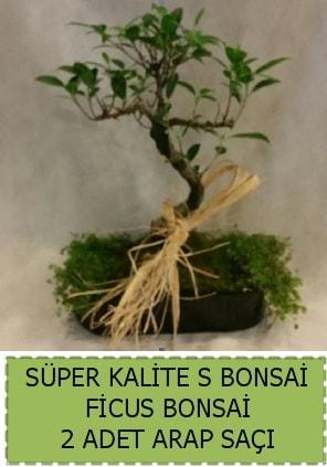 Ficus S Bonsai ve arap saçı  Bilecik çiçekçi çiçekçi telefonları
