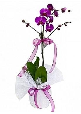 Tekli Mor Orkide  Bilecik çiçekçi çiçek yolla