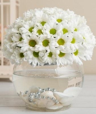 Fanusta beyaz Papatya  Bilecik çiçekçi çiçek satışı