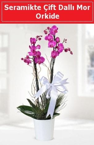 Seramikte Çift Dallı Mor Orkide  Bilecik çiçekçi anneler günü çiçek yolla