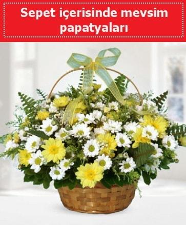 Sepet içerisinde mevsim papatyaları  Bilecik çiçekçi ucuz çiçek gönder